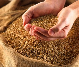Reduce cholesterol with different heart healthy recipes of barley