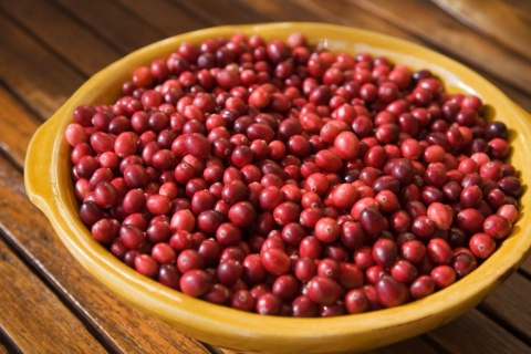 Superfood of the Season – Cranberries